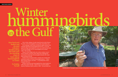Winter hummingbirds in the Gulf