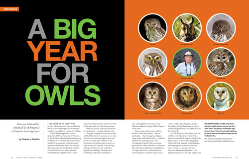 A big year for owls