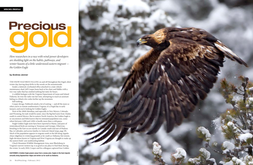 Eastern Golden Eagles and wind power