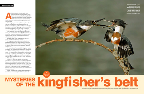 Mysteries of the kingfisher's belt