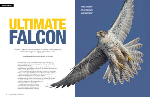Ultimate falcon