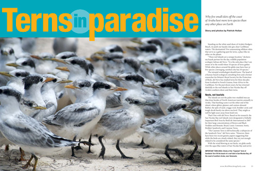 Terns in paradise