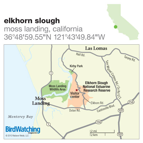 154. Elkhorn Slough, Moss Landing, California