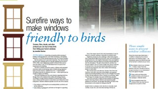 prevent birds from hitting windows