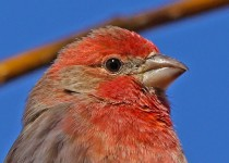 Birdwatching-064