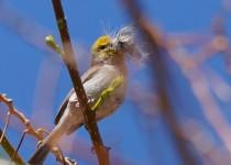 Birdwatching-065