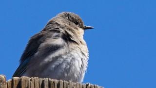 Birdwatching 69.