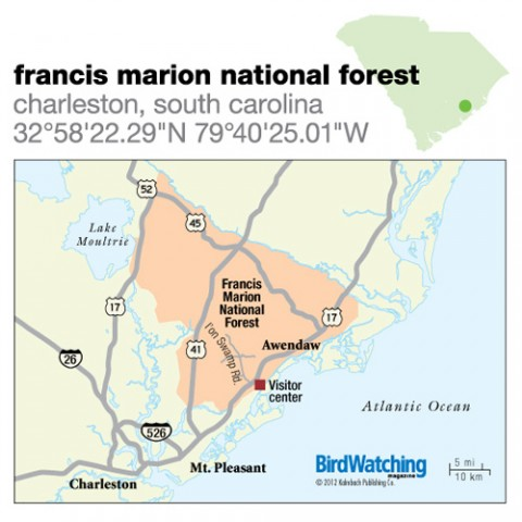134. Francis Marion National Forest, Charleston, South Carolina
