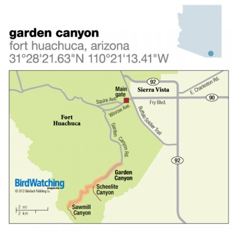 136 Garden Canyon Fort Huachuca Arizona Birdwatching