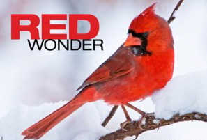 Species profile: Red wonder, Northern Cardinal