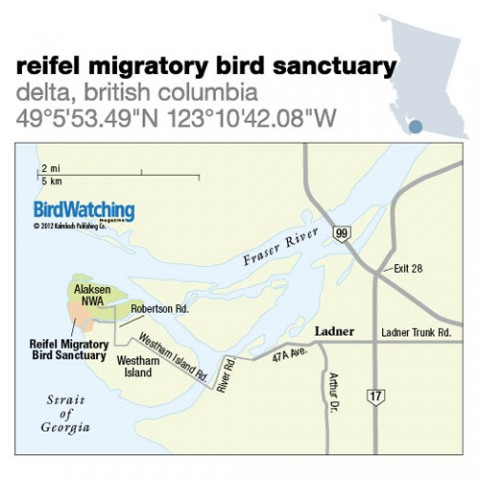 132. Reifel Migratory Bird Sanctuary, Delta, British Columbia
