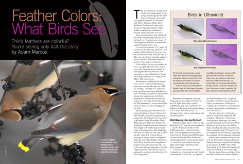 How the ability to perceive ultraviolet light permits birds to see what human eyes cannot