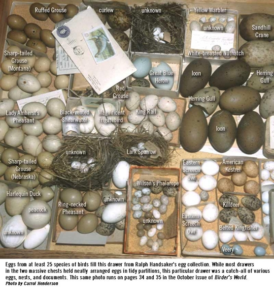 Iowa egg collection reveals past birds, history of oology, and birth of bird conservation