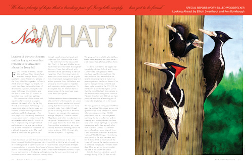What's next for the Big Woods Conservation Partnership and the Ivory-billed Woodpecker