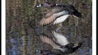 duckhunt6