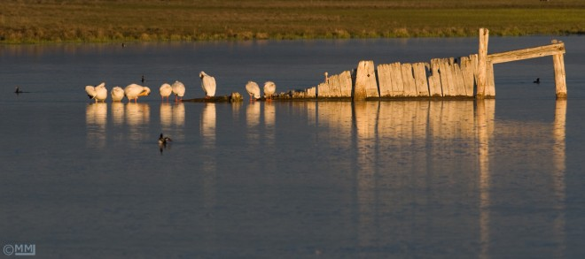 red-rock-lakes-nwr-below-dam-mia-mcpherson-2903
