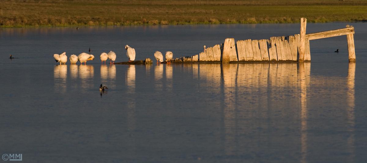 Morning light at Red Rock Lakes National Wildlife Refuge, Montana