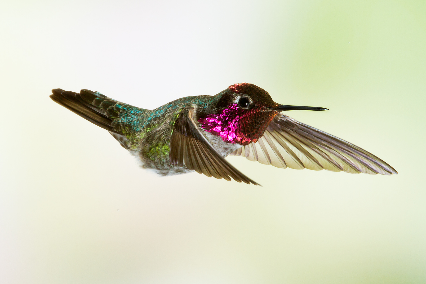 A touching memoir from a hummingbird rehabber in Hollywood