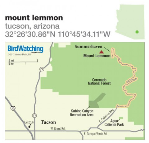 166. Mount Lemmon, Tucson, Arizona