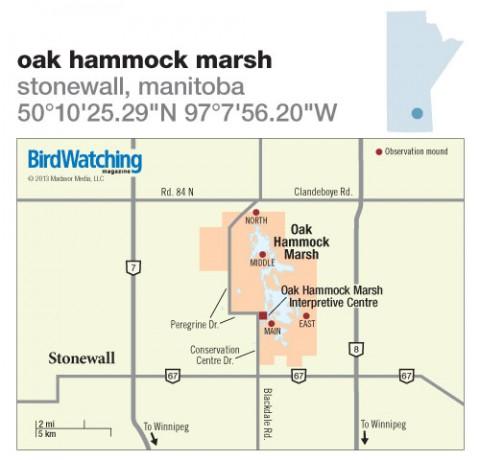 168. Oak Hammock Marsh, Stonewall, Manitoba