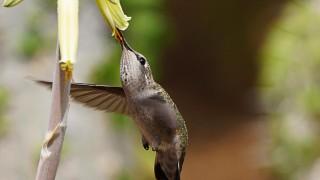 Birdwatching-72.-May-8-2013