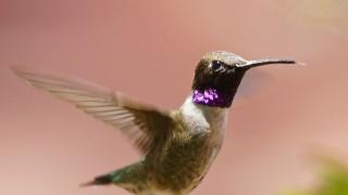 Birdwatching-75.-Black-chinned