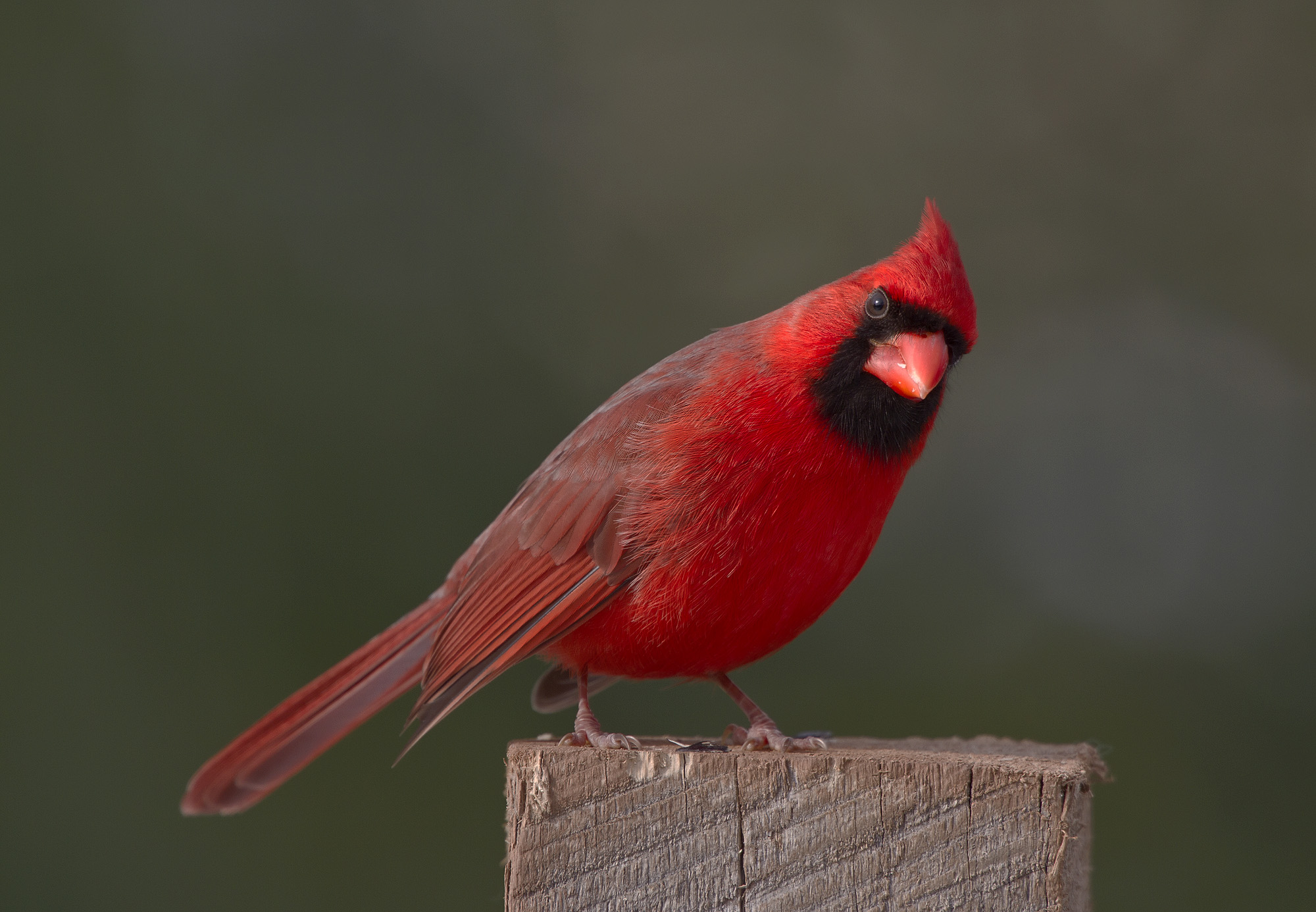 Julie Craves explains what red and orange feathers say ...