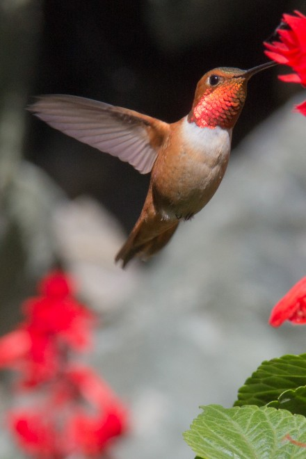 Hummers060213-4