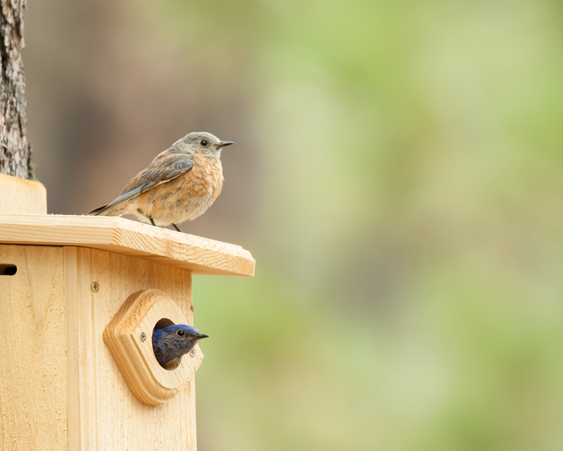How-to books offer guidance on creating bird-friendly yards and building nest boxes