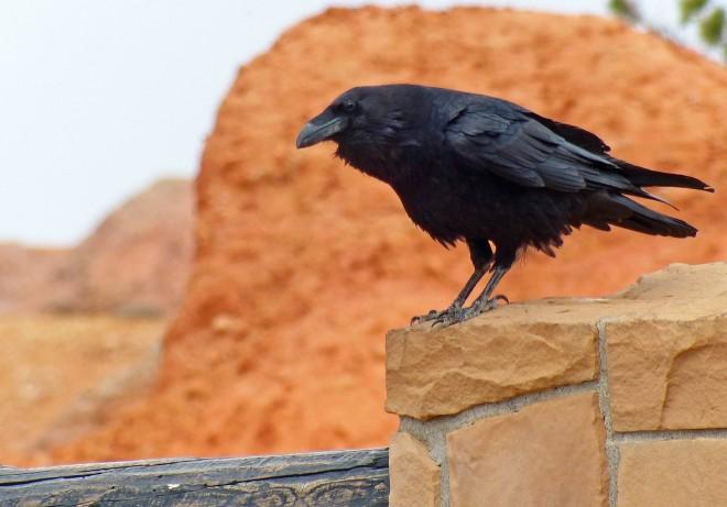 RavenBryceforweb