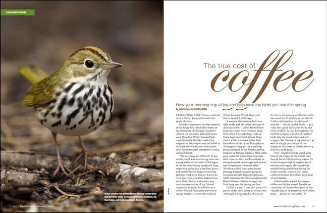Is your favorite coffee brand bad for birds?