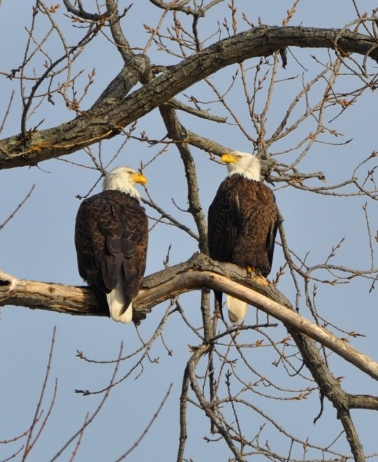 eaglecouple