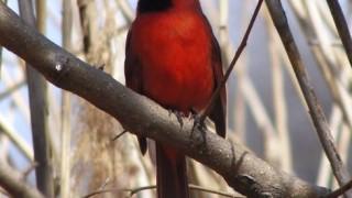 n-cardinal