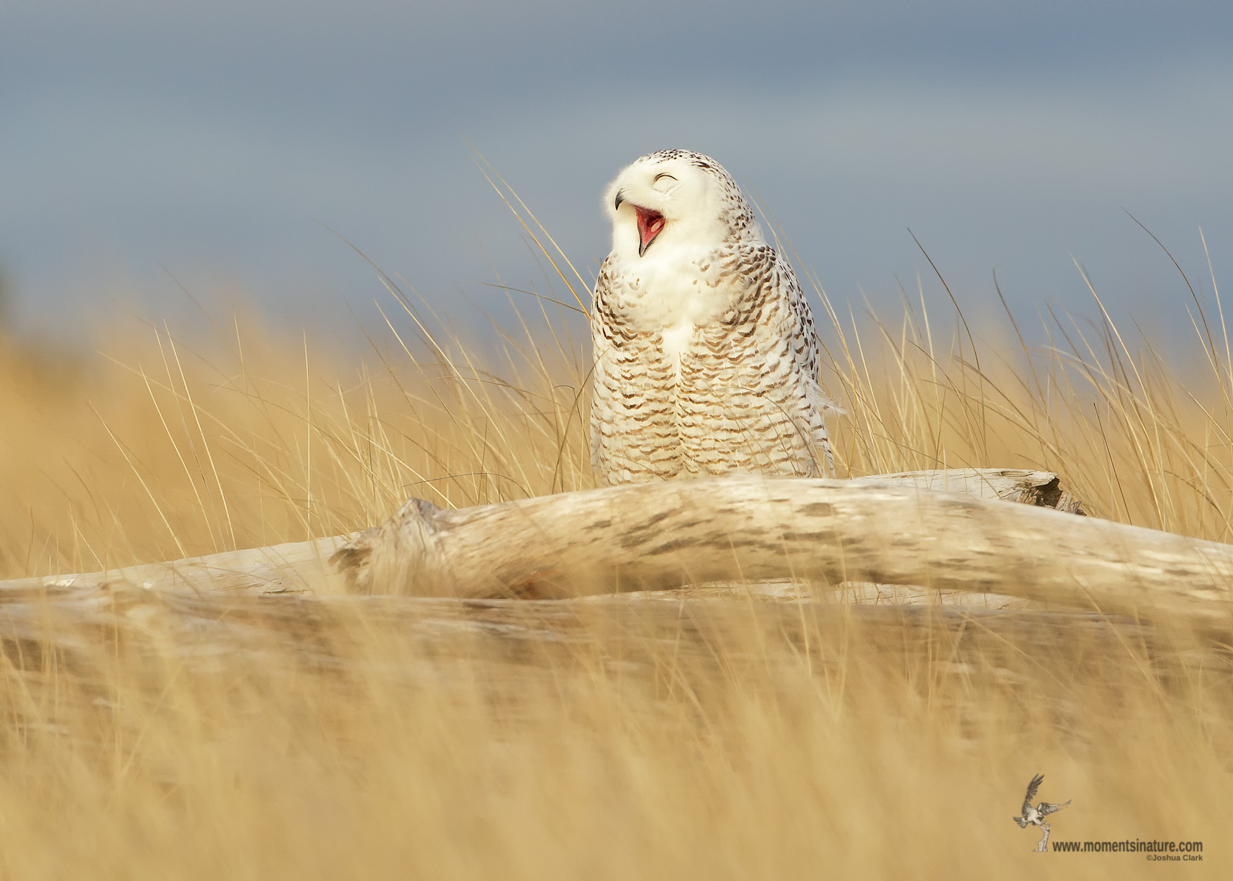 Julie Craves explains why birds yawn