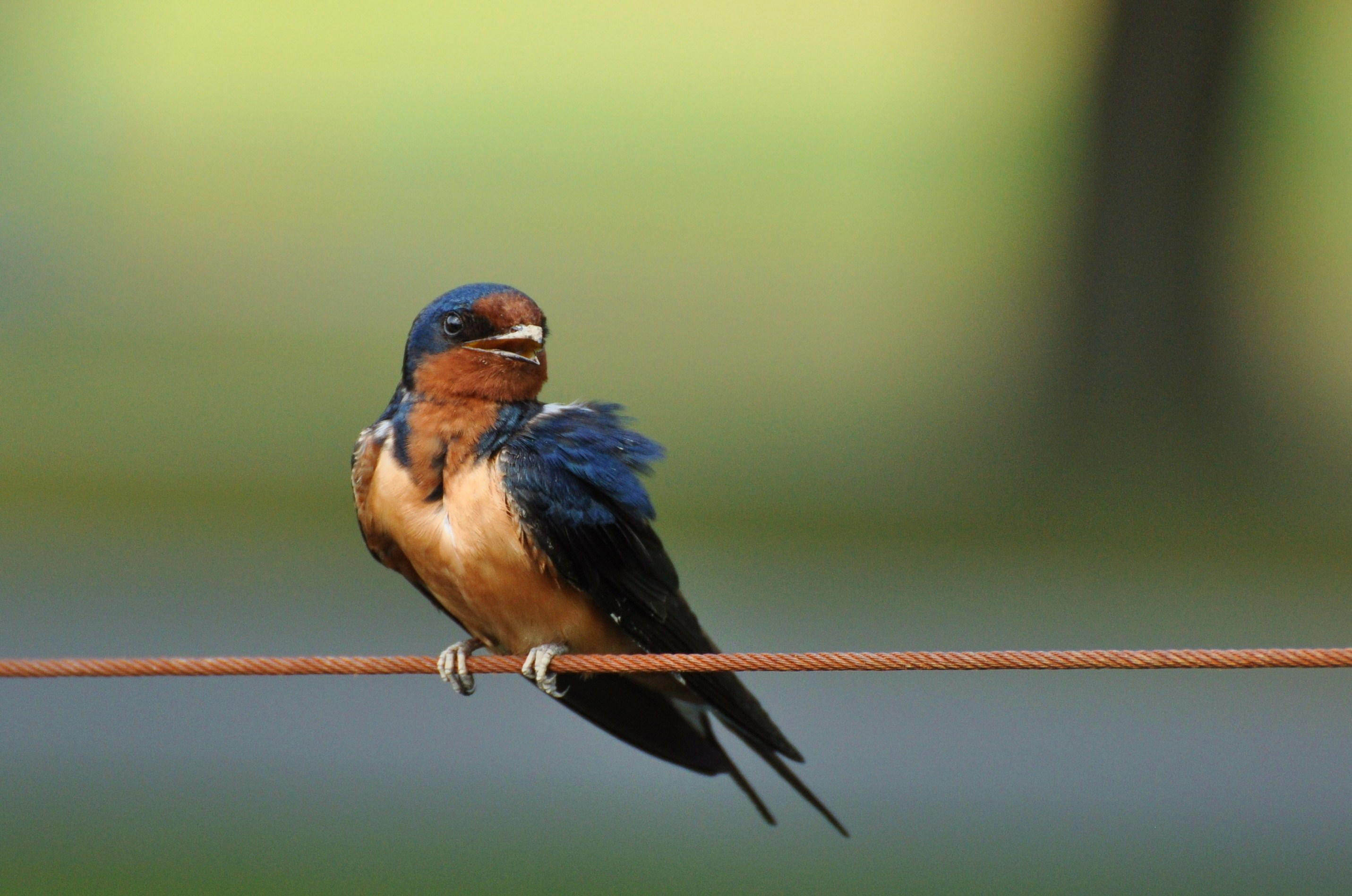Superb photos of eight swallows