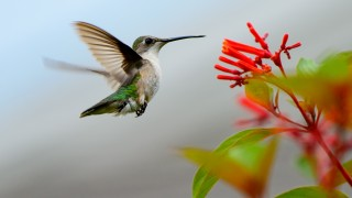 Humming-Bird-Approach-contest-pic