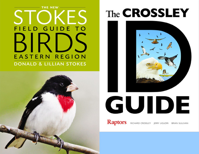 Four new books sure to help you ID birds of prey, birds of the east and west, and bird song