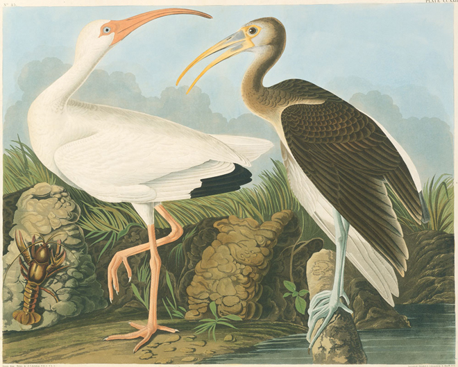 A brilliant new printing of Audubon's Birds of America