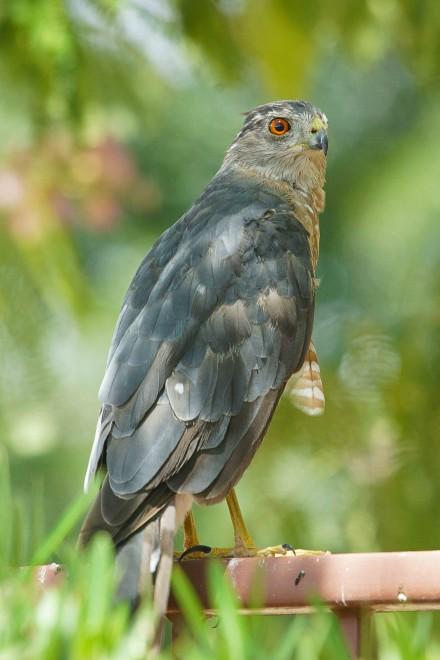 Birdwatching-78.-1-80-F8-ISO320
