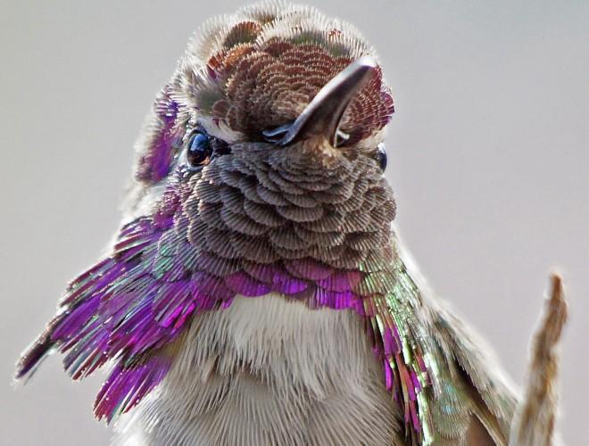 Birdwatching-81-1-125-56-ISO-400
