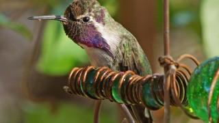 Birdwatching-86