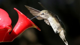 Hummingbird-Sigh-with-name