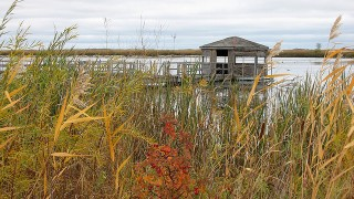 Oak Hammock Marsh, by ndh (Creative Commons).