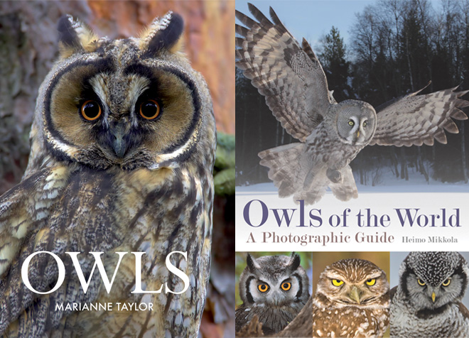 Two new books about amazing owls