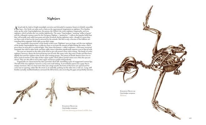 A beautiful volume of unfeathered Lazarus birds