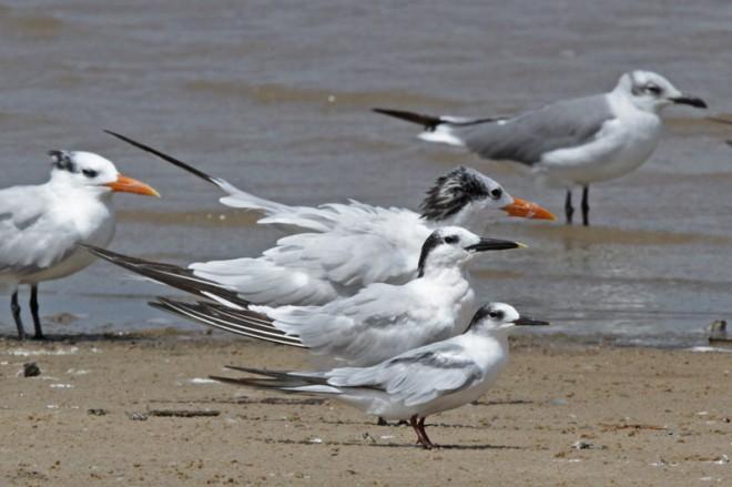 2013-09-11_2378-three-terns