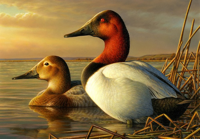 South Dakota Artist Wins 2013 Federal Duck Stamp Contest