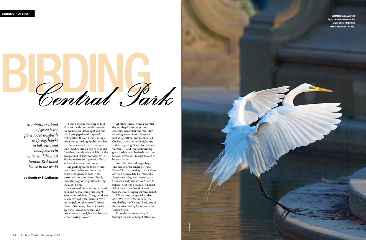 Birding Central Park