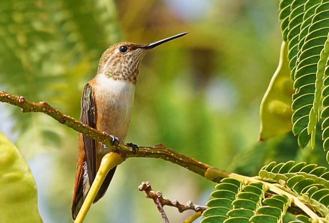 Birdwatching-88