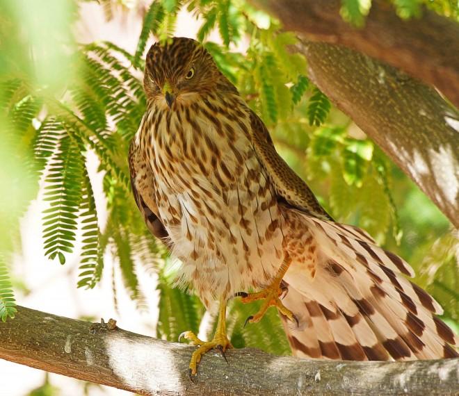 Birdwatching-89